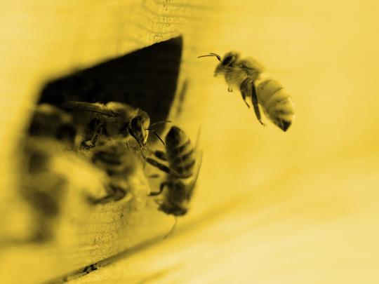 ape-predellino-spedizione